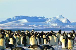 Antartida. 100 cosas que hacer antes de morir, Ultimate Wild Trip