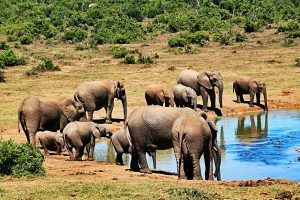 Visit Kruger Park, South Africa. 100 things to do before you die. My bucket list